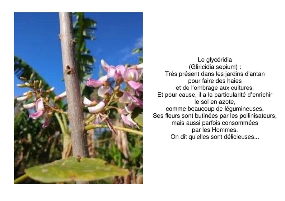 glyrecida-page-001.jpg