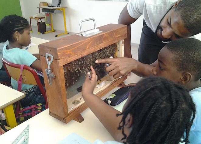 Parrainage Abeilles Guadeloupe ruche