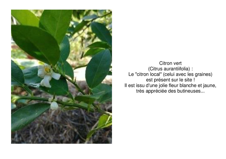 citron-page-001.jpg