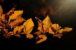 leaves-3851298_1920.jpg