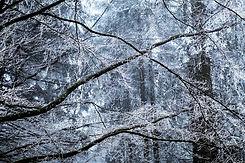 tree-3140693_1920.jpg