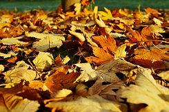 leaves-1818628_1920.jpg