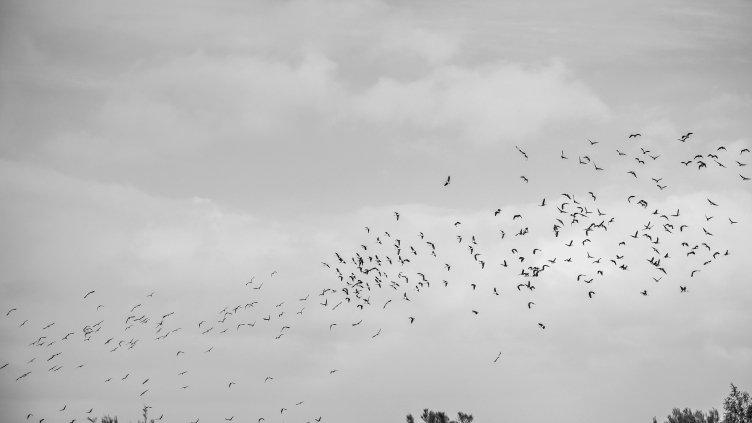 Birds In Flight V.1