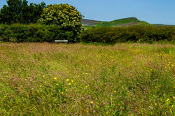 Pictures From Our Wild Flower Meadow