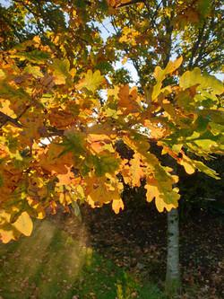 Autumn at Tarn Moor Memorial Woodlan