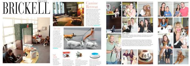 Brickell Magazine DOG