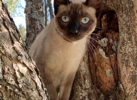 Belén, la gata gourmet | Alva Sueiras