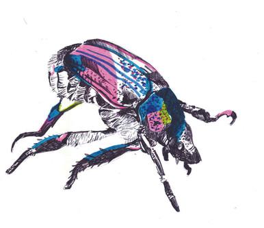 scarabé.jpg