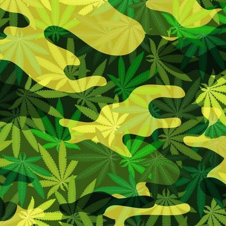 Senate Approves Medical Marijuana For Military Veterans And Advances Hemp Legalization