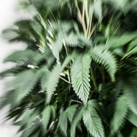 How Is Technology Affecting The Cannabis Industry?