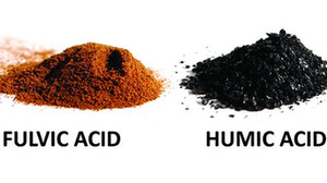 What are Humic and Fulvic Acid