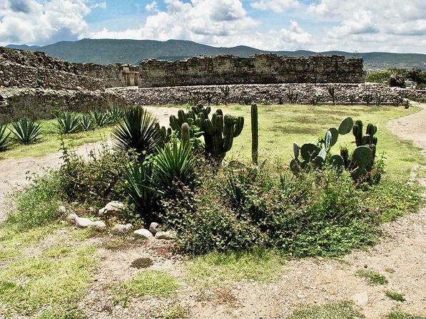 Vista_campo_Oaxaca_edited.jpg