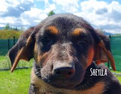 Sheylla