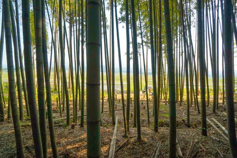 整備されつつある竹林