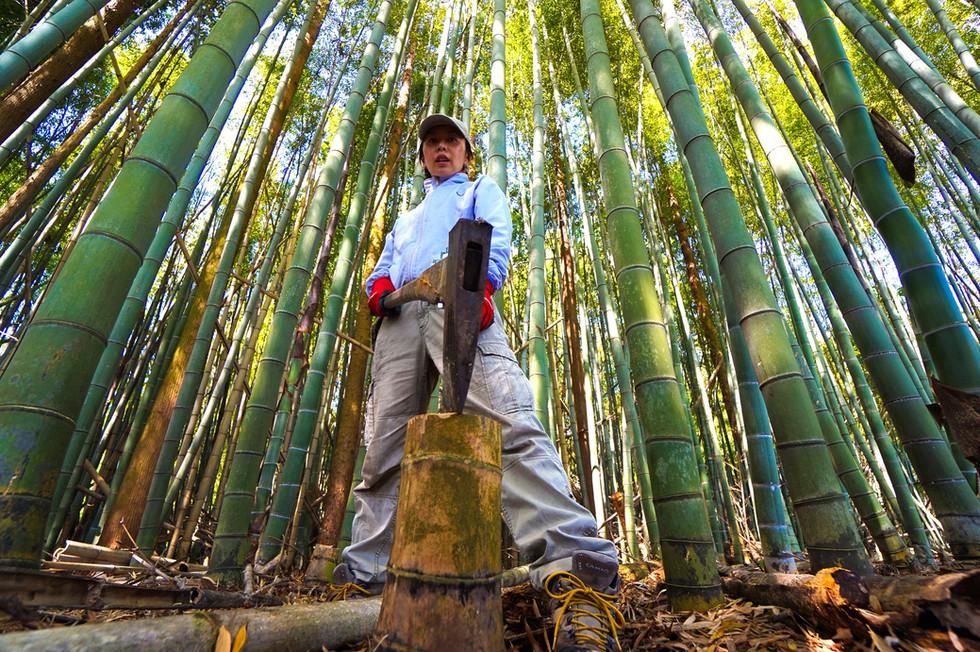 蚊の繁殖を防ぐため、竹割100本