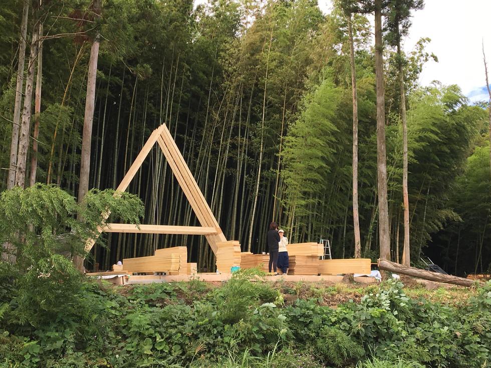 竹林に三角のシルエット