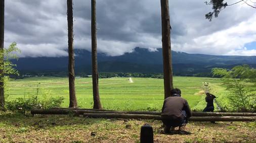 建設予定地の杉伐採