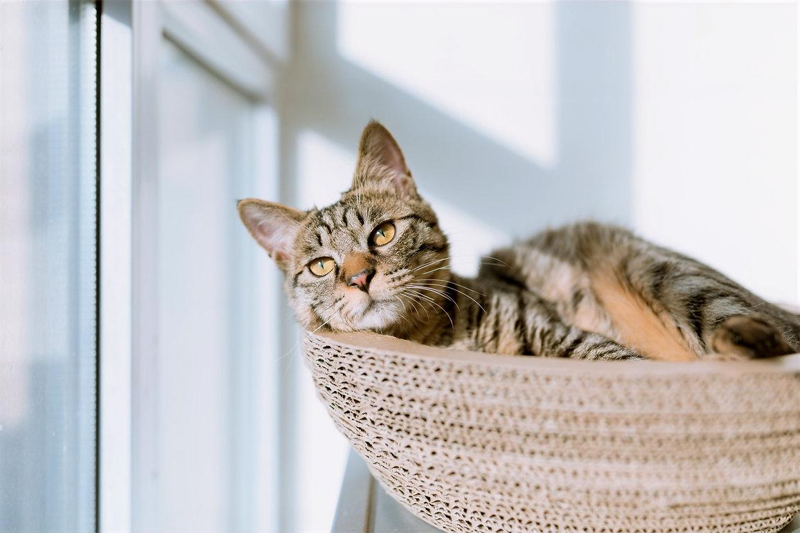 Cat in Basket_edited_edited.jpg