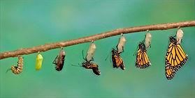 metamorfosis-de-las-mariposas_edited.jpg