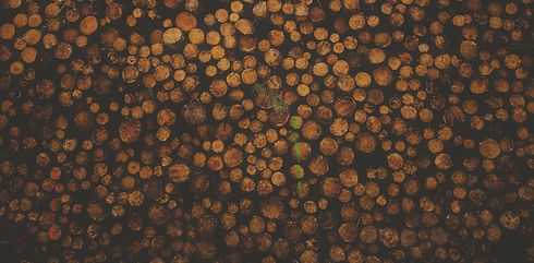 Timber Logs 2.jpg