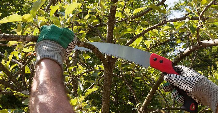 best-pruning-saw.jpg