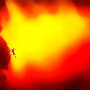 In vuur en vlam door de Zwavelzwam