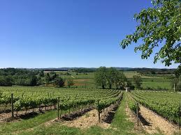 Vignoble Blanquette de Limoux.jpg