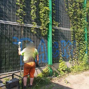 Interwencja ws dewastacji zieleni wzdłuż ulicy Franciszkańskiej
