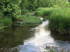 Stream Within A Lexington, KY Watershed