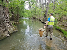 Water Quality: Aquatic Macroinvertebrate Collection