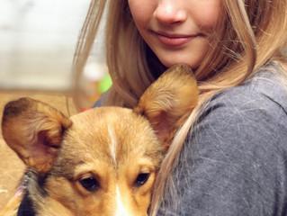 Underdog Rescue Fundraiser 2018