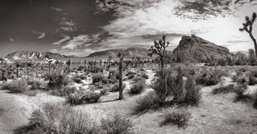 Landscape at Joshua Tree