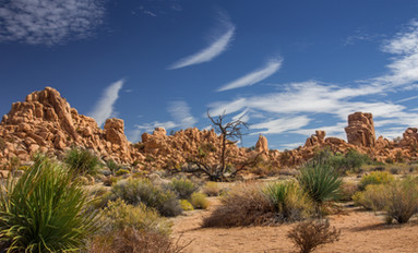 Landscape at Joshua Tree 2