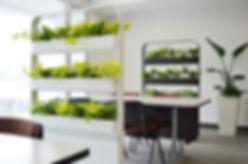 オフィス緑化、観葉植物リース、観葉植物レンタル