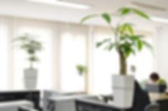 オフィスに観葉植物、グリーン職場に設置し、ストレス対策、労働環境改善 貸し植木 植物リース