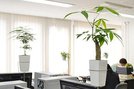 小さな植物をオフィスに設置、癒しのある職場環境 海老名市