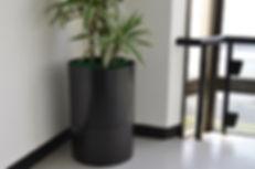 インテリア植物、おしゃれな鉢、貸し木、貸し植木、神奈川県