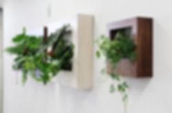 貸し植木、フォレストフレーム、絵画のような植物
