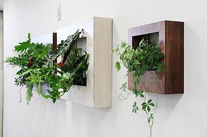 観葉植物、レンタル、壁掛けグリーン、アクセントのきいた商品でオシャレな空間