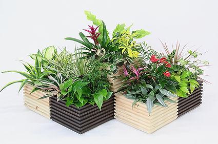 観葉植物、花観葉、寄せ植え、おしゃれな植物