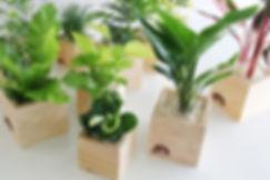貸し植木、テーブルサイズの小さな植物、手軽に観葉植物を設置し癒しとゆとりを 秦野