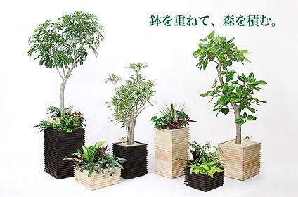 観葉植物レンタル、おしゃれな鉢カバー、観葉植物リース、貸し鉢、デザイン植物、