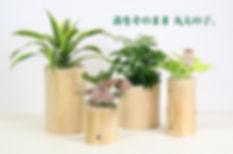丸太を使用した鉢、海老名市、無垢な植物