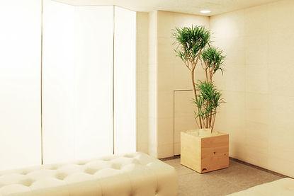 植物、リース、コンシンネ 観葉植物レンタル