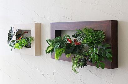 壁にかける観葉植物、レンタル、狭い空間、置き場所が無くても、植物を気軽に設置
