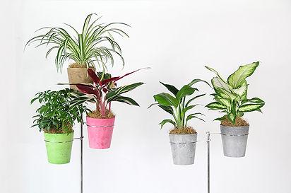 植栽リース、室内に植物を取り入れる事でゆとりのある職場に、海老名市