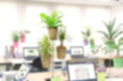 目の疲れ、植物、職場に植物、視覚疲労軽減、ストレス軽減、目の疲れに観葉植物で癒しの効果