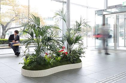 植物レンタル、観葉植物レンタル 観葉植物リース、エントランスにダイナミックな観葉植物を設置しお客様を明るく出迎えます