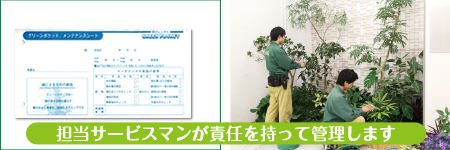 担当のサービスマンが管理します 小田原市 観葉植物レンタル 貸し植木