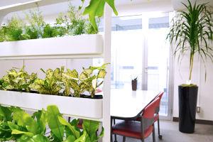 仕切りに植物、プロがコーディネート